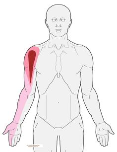 Understanding Trigger Points - Shoulder pain when sleeping on your side Shoulder Pain Relief, Shoulder Joint, Neck And Shoulder Pain, Shoulder Rehab, Shoulder Tension, Shoulder Surgery, Neck And Shoulder Exercises, Shoulder Workout, Shoulder Trigger Points