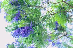Tree Branches, Child, Google, Nature, Flowers, Plants, Art, Art Background, Boys
