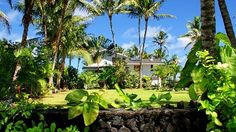 Front of house from street. Lava walls, coconut palms, hibiscus and more.