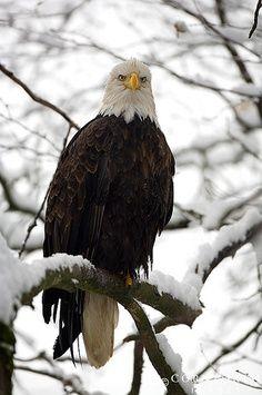 Just saw an eagle in the Keweenaw Peninsula, Upper Michigan.