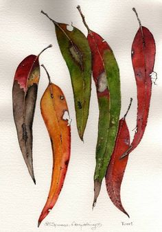 australian native flowers watercolour - Google Search