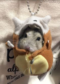 So cute! Baby Animals Super Cute, Cute Little Animals, Cute Funny Animals, Baby Hamster, Baby Cats, Funny Hamsters, Cute Rats, Cute Animal Pictures, Cute Creatures