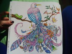 My beautiful bird from coloring book Animorphia by Kerby Rosanes / Proměny zvířat antistresové omalovánky