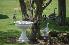 Geese are welcome in The Park.