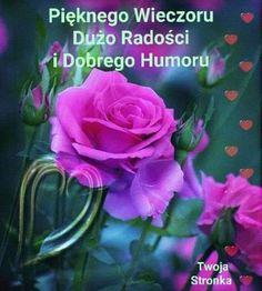 Christian Dating Advice, Good Night, Humor, Rose, Flowers, Plants, Nice Asses, Sunset, Friendship