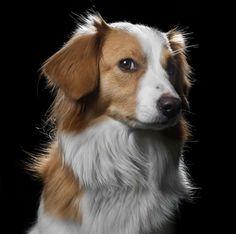 Cães e gatos são seres sensíveis e indiferentes à vaidade humana. Para Robert…