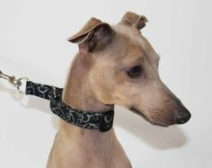 NEW - Limited Slip Buckle Collar for Italian Greyhounds and other small breeds Black and Silver Filigree