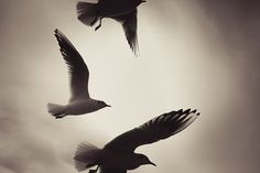 ___ by gwagwa, via Flickr