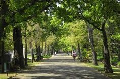I used to walk down here every day. Cape Town, Childhood Memories, Beautiful Homes, Country Roads, Gardens, Spaces, Google Search, Travel, House Of Beauty