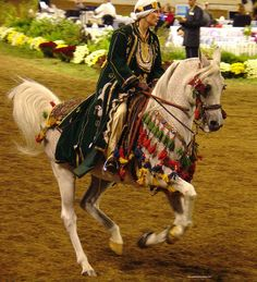 Arabian horse costume class- these colors are awesome!!!