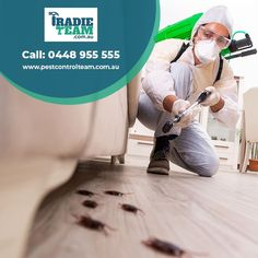 Looking for emergency pest control & inspection ? Call our Insured pest control expert on 0448955555 for same day pest control services. Pest Control Services, A Team, Melbourne, Sick, Touch, Wall