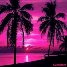 Pink palm tree sunset