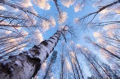 Winter: Photos by Joni Niemela Beautiful photos of winter in Finland. Magical Forest, Beautiful Forest, Beautiful World, Winter Scenery, Winter Sky, Winter Photos, Tree Tops, Finland, Worlds Largest