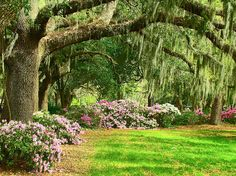 Forsyth Park - Savannah, Georgia    Once upon a time, I was told of this place...set aside with its quiet golden-roomed Bed & Breakfasts overlooking a river, and ancient trees thickly draped with Spanish moss...      I'd like to go there some day, too...