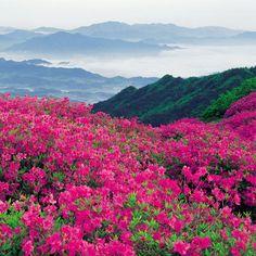 Paisajes De Flores | Paisaje y flores para iPad verde rosa naturaleza azul ipad2 paisajes ...