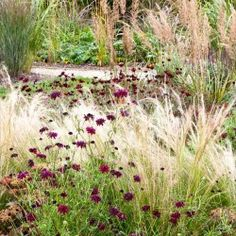 1000 images about garden plants on pinterest gravel for Mass planting grasses