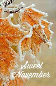 It was a Sweet November day when you were born son. Welcome November, Sweet November, November Month, Happy November, Hello November, November Images, November Pictures, November Quotes, Fall Pictures