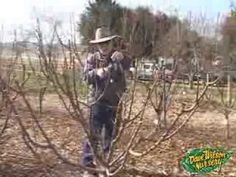 Winter Pruning Multiple-Budded and Extra-Low Fruit Trees 2014 | Dave Wilson Nursery