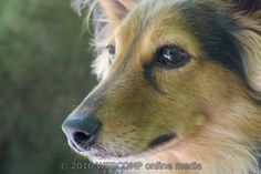 Meer weten over mijn passie: http://www.webcomp.nl/?start=fotos  #fotosessie #fotoshoot #fotograaf #fotografie #huisdier #dier #dierenwinkel #dierenpension #dierenhulp #dierenasiel #hond