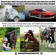 Check out ponies for sale and all the bits, tack & accessories you need to go with them!
