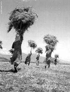 Με τα υψωμένα δικράνια, οι γυναίκες καθαρίζουν ένα χωράφι στην Μπάκραινα της Λάρισας (1948)/Τάκης Τλούπας