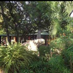 Wonderful gardens at the Senegambia hotel - the best place to stay in The Gambia.