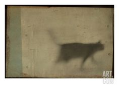 Blurred Cat Walking. A Photographic Print by Mia Friedrich at Art.co.uk