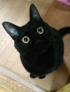 猫 Travel allianz travel insurance Baby Animals, Funny Animals, Cute Animals, Crazy Cat Lady, Crazy Cats, I Love Cats, Cool Cats, Beautiful Cats, Animals Beautiful