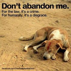 Don't abandon your pets.  If you have to, find a foster home or a no kill shelter.