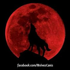 wolf moon wolves