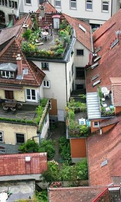 Natural Rooftop Garden Ideas for Urban House. In densely populated urban areas with limited land use, most houses certainly have rooftop garden, flat roofs, or small terraces. It will be awesome t. Outdoor Spaces, Outdoor Living, Rooftop Terrace, Terrace Garden, Green Terrace, Terrace Decor, Rooftop Design, Porch Garden, Outdoor Gardens