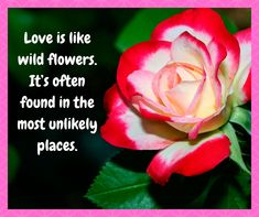 Love is like wild flowers. It's often found in the most unlikely places. Beautiful Flower Quotes, Beautiful Flowers, Flowers Nature, Wild Flowers, Flower Delivery, Floral Bouquets, Flower Photos, Love, Usa