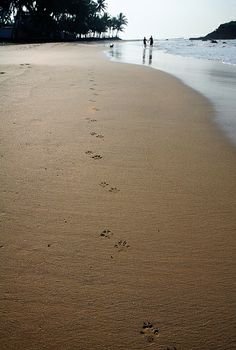 canine footprints on the beach, Mirissa, Sri Lanka #SriLanka #Mirissa #Beach #Dog