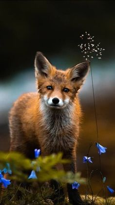 New Red Bird Photography Nature 31 Ideas Cute Wild Animals, Animals Beautiful, Animals And Pets, Beautiful Things, Fox Pictures, Nature Pictures, Animal Photography, Nature Photography, Fuchs Baby