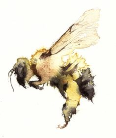Image result for Bumblebees