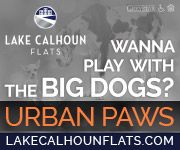 What To Do if Your Dog Gets Sprayed by a Skunk   Dog License Minneapolis   Sidewalk Dog BlogSidewalk Dog Blog