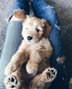 Fashionably Tucker as a little pup -- Fashionably Kay Animals And Pets, Baby Animals, Cute Animals, Dogs Tumblr, Cute Puppies, Dogs And Puppies, Cute Creatures, Dog Mom, Pet Dogs
