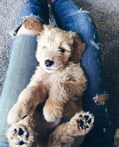 Fashionably Tucker as a little pup -- Fashionably Kay Animals And Pets, Baby Animals, Cute Animals, Dogs Tumblr, Cute Puppies, Dogs And Puppies, Cute Creatures, Shiba Inu, Dog Mom