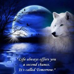 Rasta Wolf Morning Quotes - Quotes 4 You Native American Prayers, Native American Wolf, Native American Quotes, Wolf Qoutes, Lone Wolf Quotes, Wolf Photos, Wolf Pictures, Good Night Prayer, Photographie Portrait Inspiration