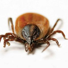 Are frigid temps killing off dreaded ticks? Spoiler alert - NOT!   Tick-borne disease expert Dr. Thomas Mather conducts tests that determine frigid temps not likely to reduce Spring/Summer tick abundance
