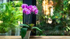 Vyrobte si vysoce účinné hnojivo z kávy, banánů a skořápek. Bude, Plants, Plant, Planets