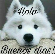 Hola!  Buenos días!