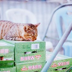 Shipping cat protects shipment.