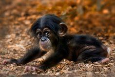 baby monkey- who doesn't love a monkey