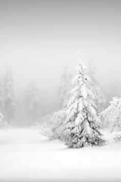 I am sharing some interesting snow images of the winter 2017 with you. great photography of winter like fog photography, iceberg photography and snowfall photography (Snow Images). Winter Szenen, Winter Love, Winter Magic, Winter White, Winter Season, Winter Christmas, Winter Trees, Christmas Tree, Snow White