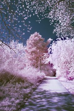 pretty blooming trees
