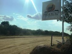 Bushveld holiday at Dikhololo 5 reasons it's a great family destination Stuff To Do, Things To Do, Family Destinations, 10 Year Old, Working Moms, Wind Turbine, South Africa, Places To Go, Children