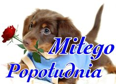 Miłego popołudnia #milegopopoludnia szczeniak Good Morning Funny, Man In Love, Humor, Dogs, Pictures, Animals, Messages, Night, Photos