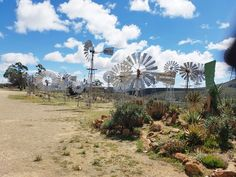 The Loeriesfontein windpump museum, one of only two in the world. Windmills, Under Construction, West Coast, Touring, Wild Flowers, South Africa, Fields, Scenery, Fair Grounds