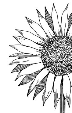 Flower Drawing Discover Sunflower iPhone Case by sweetlily Art Drawings Sketches, Easy Drawings, Sketch Art, Tattoo Sketches, Tattoo Drawings, Tattoos, Sunflower Drawing, Sunflower Coloring Pages, Sunflower Stencil
